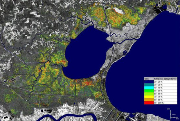 This Landsat satellite photo shows the status of cypress around Lake Maurepas on Oct. 20, 2009. The Atchafalaya Basinkeeper and Lower Mississippi Riverkeeper entered into a $33,000 settlement last week with a Tennessee businessman who was logging cypress in Ascension Parish without a permit. The money will be used to plant 3,000 cypress trees in the area. (NASA Stennis Space Center)